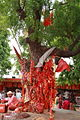 Patan Devi Tree of wishes.JPG