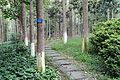 Pathway through Camptotheca acuminata - Chengdu Botanical Garden - Chengdu, China - DSC03513.JPG