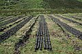 Peat Drying. - geograph.org.uk - 474651.jpg