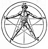 Pentagram and human body (Agrippa).jpg