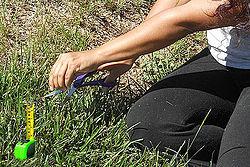 Perfectionism - Measuring Grass Blade.jpg