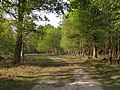 Perrywood Ironshill Inclosure, New Forest - geograph.org.uk - 430694.jpg