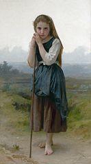 Small shepherd