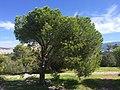 Philopappos - panoramio.jpg