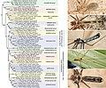 Pholcidae (10.3897-zookeys.789.22781) Figure 12.jpg