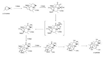 Phorbol - Image: Phorbol synthesis