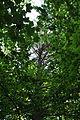 Pidhorodne-modryna-n2-15058073.jpg