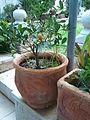 PikiWiki Israel 18061 Plants of Israel.jpg