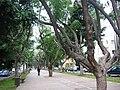 PikiWiki Israel 2851 Rothschild Boulevard Tel-Aviv שדרות רוטשילד תל-אביב.jpg