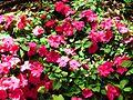 PikiWiki Israel 42861 Plants of Israel.JPG