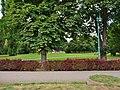 Pirna, Germany - panoramio (78).jpg