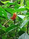 Plants Chicago 052