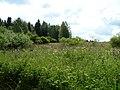 Pod Farským lesem 02.jpg