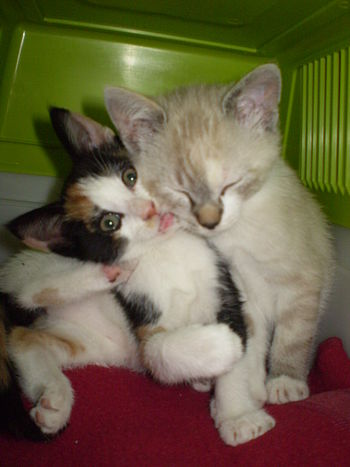 English: My kittens