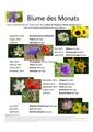 Poster Blume des Monats.pdf