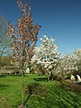 Praha, Troja, Botanická zahrada, Japonská zahrada II.JPG