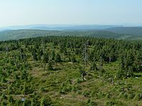 Primaveal forest Jizera.JPG