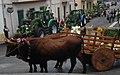 Processione San Isidoro Borore.jpg