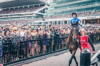 2014 Melbourne Cup - Protectionist and jockey Ryan Moore at the 2014 Melbourne Cup