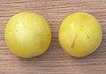 Prunus domestica var. syriaca, Gele kroosjespruim.jpg
