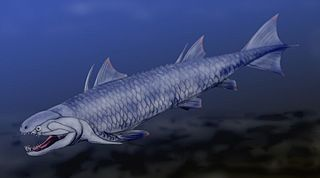 <i>Psarolepis</i> genus of fishes