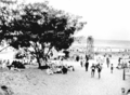 Queensland State Archives 1122 Beach scene and Coast Oak Trees Maroochydore December 1930.png