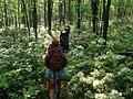 Quehanna Trail 2.jpg
