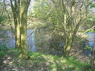 Headwaters of the Dinkel near Rosendahl-Holtwick