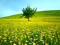 Qusar landscape.jpg