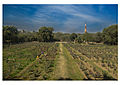 Qutub Minar from Backyards.jpg