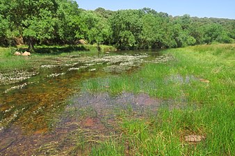 Río Yeltes.jpg