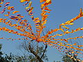 Rajgir - 015 Flags flying in the Wind (9242397735).jpg