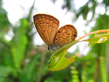 Rare butterfly.jpg