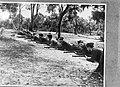 Recruten van ML-KNIL (Militaire Luchtvaart Koninklijk Nederlands Indisch Leger) , Bestanddeelnr 934-9081.jpg
