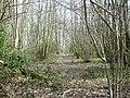 Rectory Wood by Lenacre Street - geograph.org.uk - 1198887.jpg