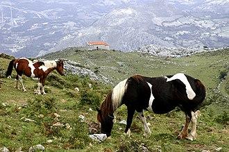 Morcín - Asturcones in the Morcín landscape