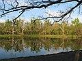 Reflective pond - Mohawk park - panoramio.jpg