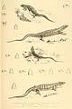 Reptiles of British India (5).jpg