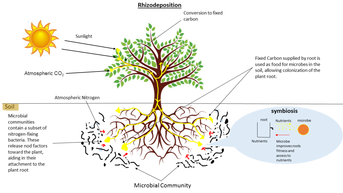 soil plant relationship in nutrients interaction