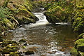 River Erme in Ivybridge.jpg