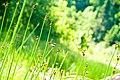 River Weeds (2620921080).jpg