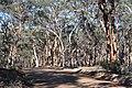 Road through the forest, Dryandra Woodland, Western Australia.jpg