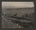 Rocky Mountain sheep, Banff, Alberta (HS85-10-23920).jpg