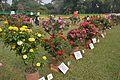Rose - Winter Flower Show - Agri-Horticultural Society of India - Alipore - Kolkata 2013-01-05 2365.JPG