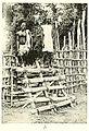 SCHWAB(1947) Fig. 041b.jpg