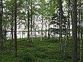 Sairastensaari Sanginjärvi.JPG