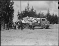 Salinas, California. Baggage belonging to evacuees of Japanese ancestry is brought in by truck to t . . . - NARA - 536165.tif