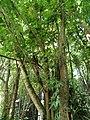 San Juan Botanical Garden - DSC07014.JPG