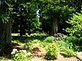 San Mateo Arboretum, San Mateo, CA - IMG 9087.JPG