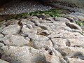 Sandstone Geology at Clashach Cove - geograph.org.uk - 185418.jpg